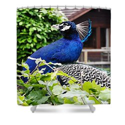 Temple Peacock Shower Curtain