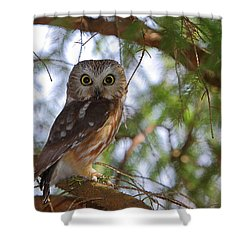 Saw-whet Owl Shower Curtain
