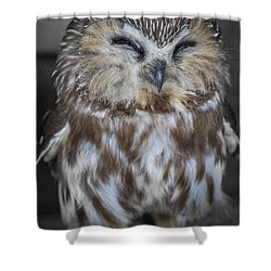 Saw Whet Owl Shower Curtain