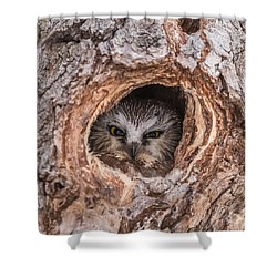 Saw-whet Secret Shower Curtain by Yeates Photography