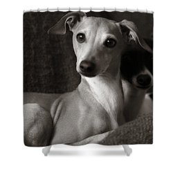 Say What Italian Greyhound Shower Curtain by Angela Rath
