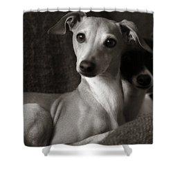 Say What Italian Greyhound Shower Curtain