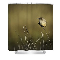 Say's Flycatcher Shower Curtain