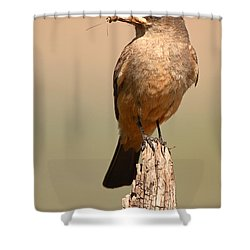 Say's Phoebe On Perch With Grasshopper In Beak Shower Curtain