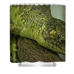 Scales Of The Hunter Shower Curtain