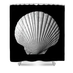 Scallop  Seashell Shower Curtain