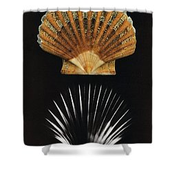 Scallop Shell X-ray Shower Curtain by Photo Researchers