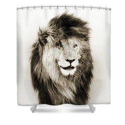 Scar Lion Closeup Square Sepia Shower Curtain