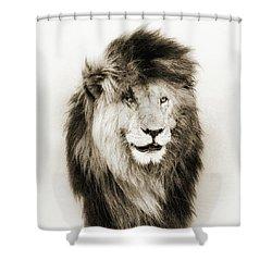 Scar Lion Closeup Square Sepia Shower Curtain