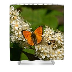 Shower Curtain featuring the photograph Scarce Copper 2 by Jouko Lehto
