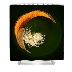 Shower Curtain featuring the photograph Scarce Copper 4 by Jouko Lehto