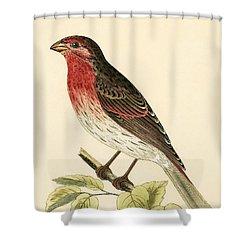 Scarlet Bullfinch Shower Curtain