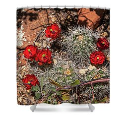 Scarlet Cactus Blooms Shower Curtain