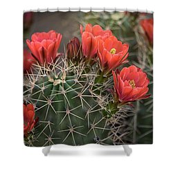 Shower Curtain featuring the photograph Scarlet Hedgehog Cactus  by Saija Lehtonen