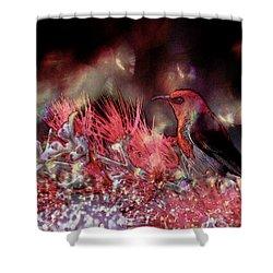 Scarlet Honeyeater Shower Curtain by Ericamaxine Price