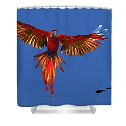 Scarlet Macaw On The Osa Peninsula Shower Curtain