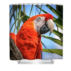 Shower Curtain featuring the photograph Scarlet Macaw by Steven Sparks