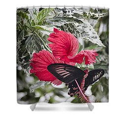 Scarlet Mormom Butterfly On Hibiscus Shower Curtain by Shirley Mitchell