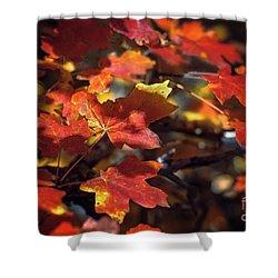 Scarlet September Shower Curtain