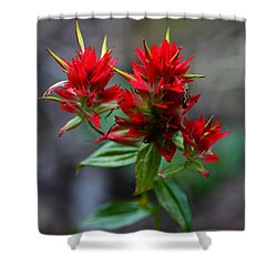 Scarlet Red Indian Paintbrush Shower Curtain