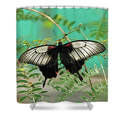 Shower Curtain featuring the photograph Scarlet Swallowtail Butterfly -2 by Paul Gulliver