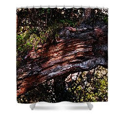 Scarred Shower Curtain by Christopher Holmes