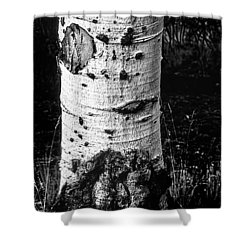 Scarred Old Aspen Tree Trunk In Colorado Forest Shower Curtain