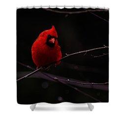 Scene Stealer  Shower Curtain