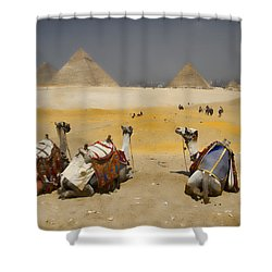 Scenic View Of The Giza Pyramids With Sitting Camels Shower Curtain by David Smith