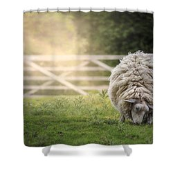 Sheep Shower Curtain by Joana Kruse