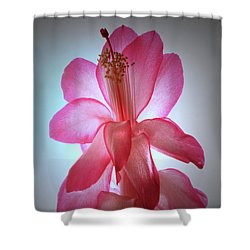 Shower Curtain featuring the photograph Schlumbergera Portrait. by Terence Davis
