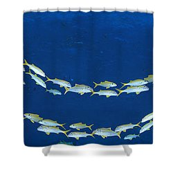 School Of Fish Great Barrier Reef Shower Curtain