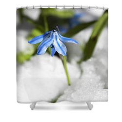 Shower Curtain featuring the photograph Scilla In Snow by Jeff Severson