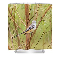 Shower Curtain featuring the photograph Scissortail In Scrub by Robert Frederick