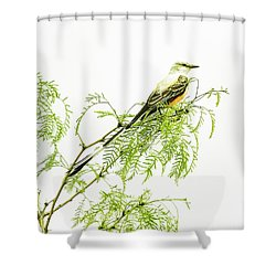 Shower Curtain featuring the photograph Scissortail On Mesquite by Robert Frederick