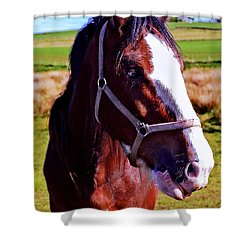 Scottish Clydesdale  Shower Curtain by Roger Wedegis