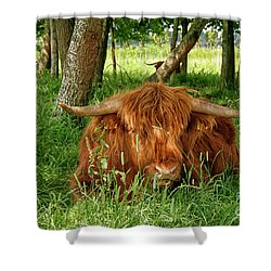 Shower Curtain featuring the photograph Scottish Higland Cow by Patricia Hofmeester