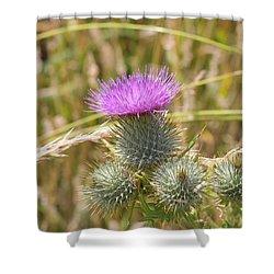 Scottish Thistle Shower Curtain