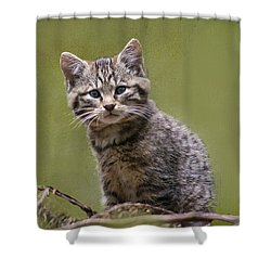 Scottish Wildcat Kitten Shower Curtain