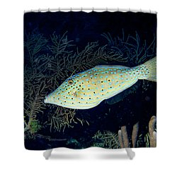 Scrawled Filefish Shower Curtain by Jean Noren