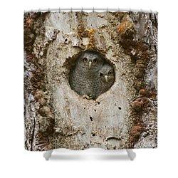 Screech Owl Babies Peeking Out Shower Curtain