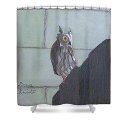 Screech Owl On Gate To Pergola Shower Curtain