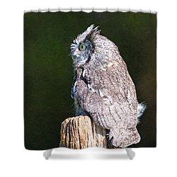 Screech Owl Profile Shower Curtain