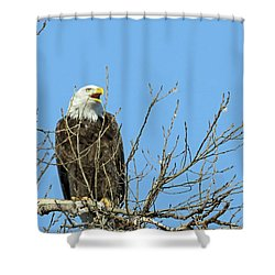 Screeching Eagle Shower Curtain by Brook Burling