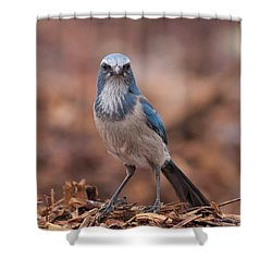 Scrub Jay On Chop Shower Curtain