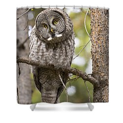 Scrutiny Shower Curtain