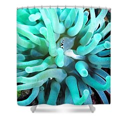 Sea Anemone And Squat Shrimp Shower Curtain