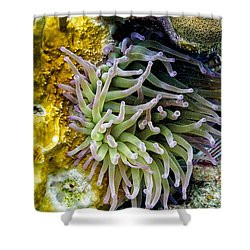 Sea Anemone And Squirrelfish Shower Curtain