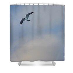 Sea Bird In Flight Shower Curtain