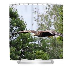 Sea Eagle Shower Curtain